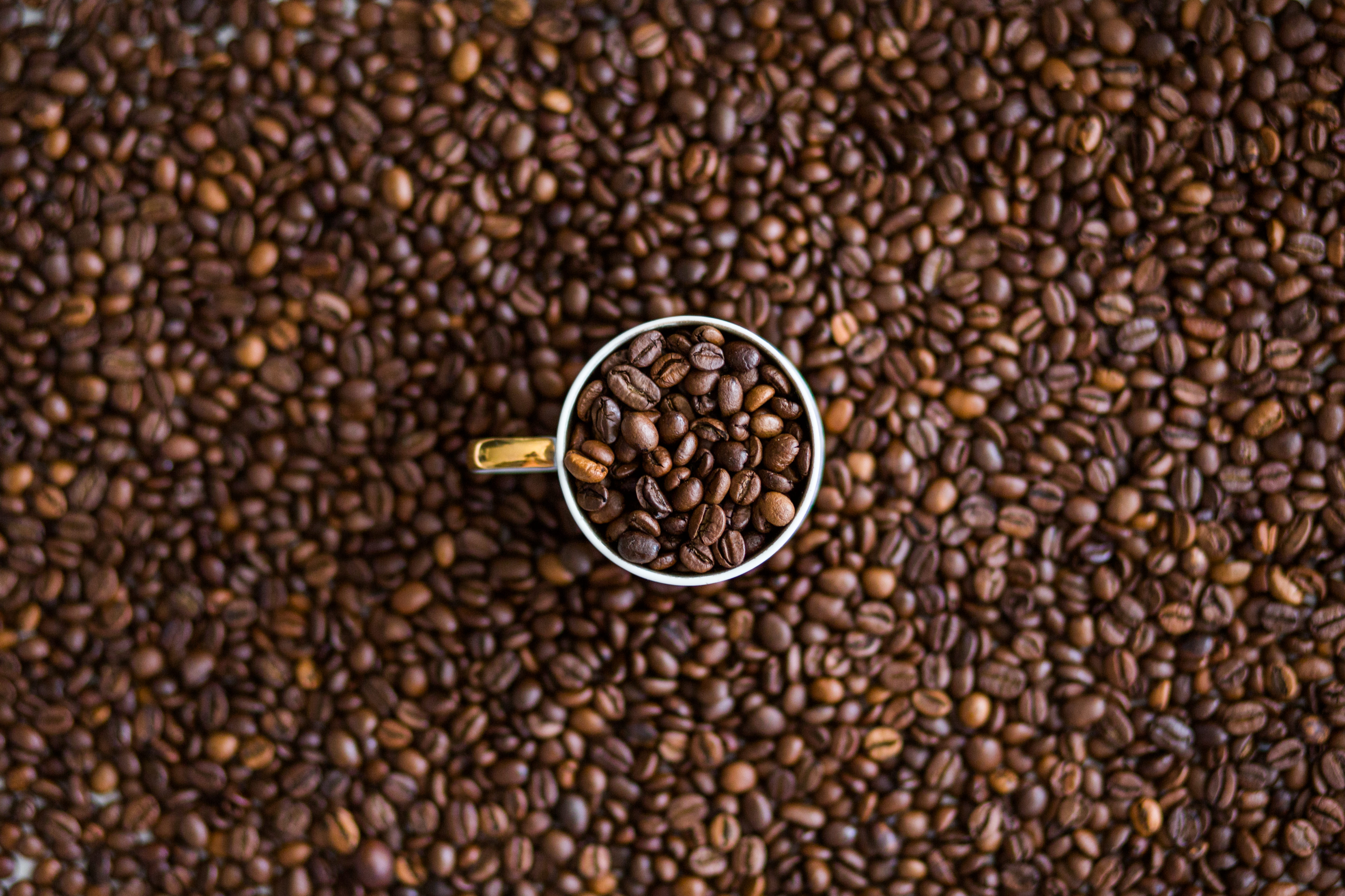 coffee roasting information guide